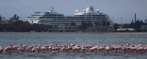 Ship and Flamingoes