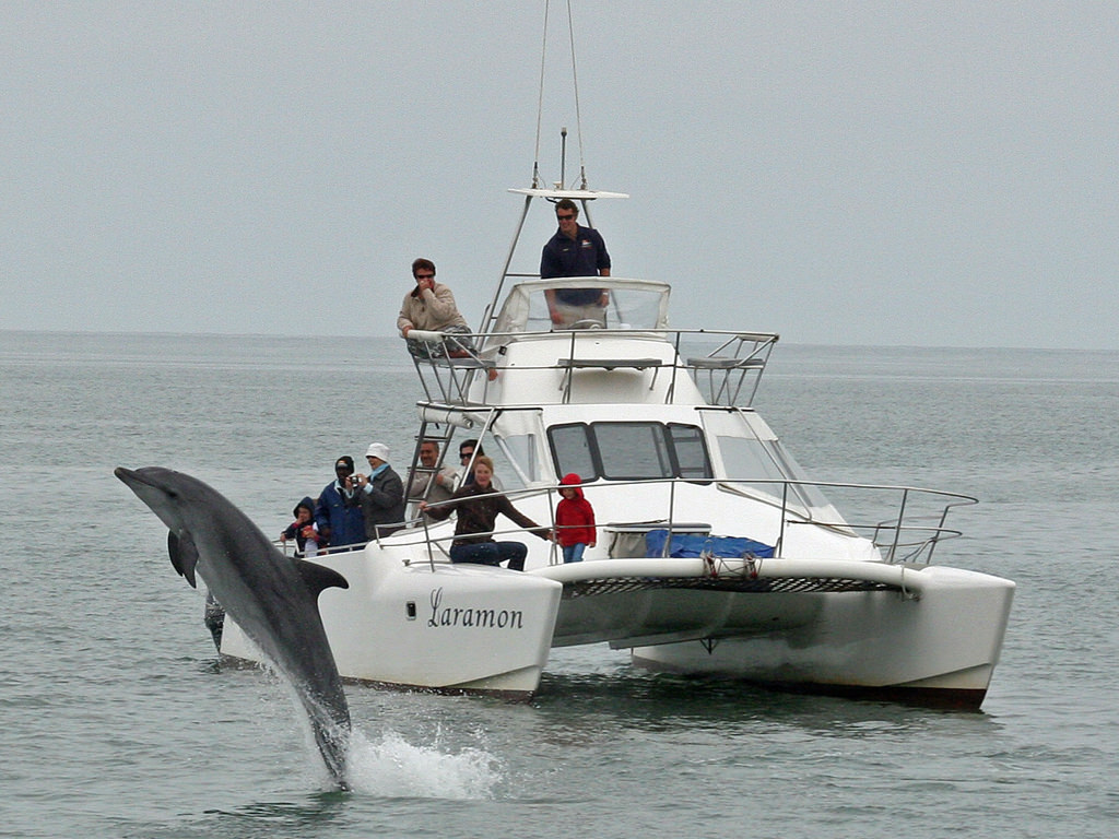 Image result for dolphin-boat-tours